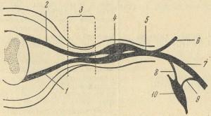 Нахотта корешковый нерв