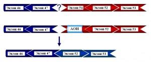 Дистрофин_делеция 48-50 экзонов гена DYS_пропуск экзона 51